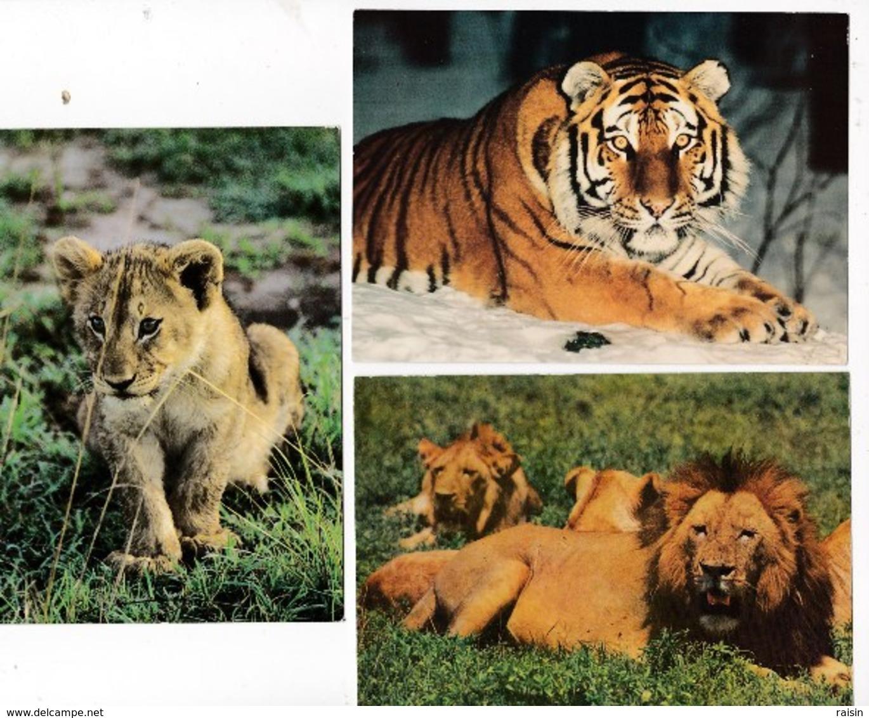 Animaux Lions En Groupe  Lionceau(Zoo De Palmyre N°21 )  Tigre De Sibérie (Panthera Tigris Altaica) Lot De 3 Cartes BE - Lions