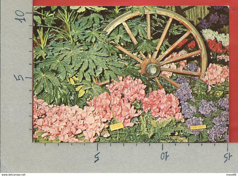 CARTOLINA NV ITALIA - GENOVA - EUROFLORA 76 - Veduta Di Euro Flora 71 - 10 X 15 - Esposizioni