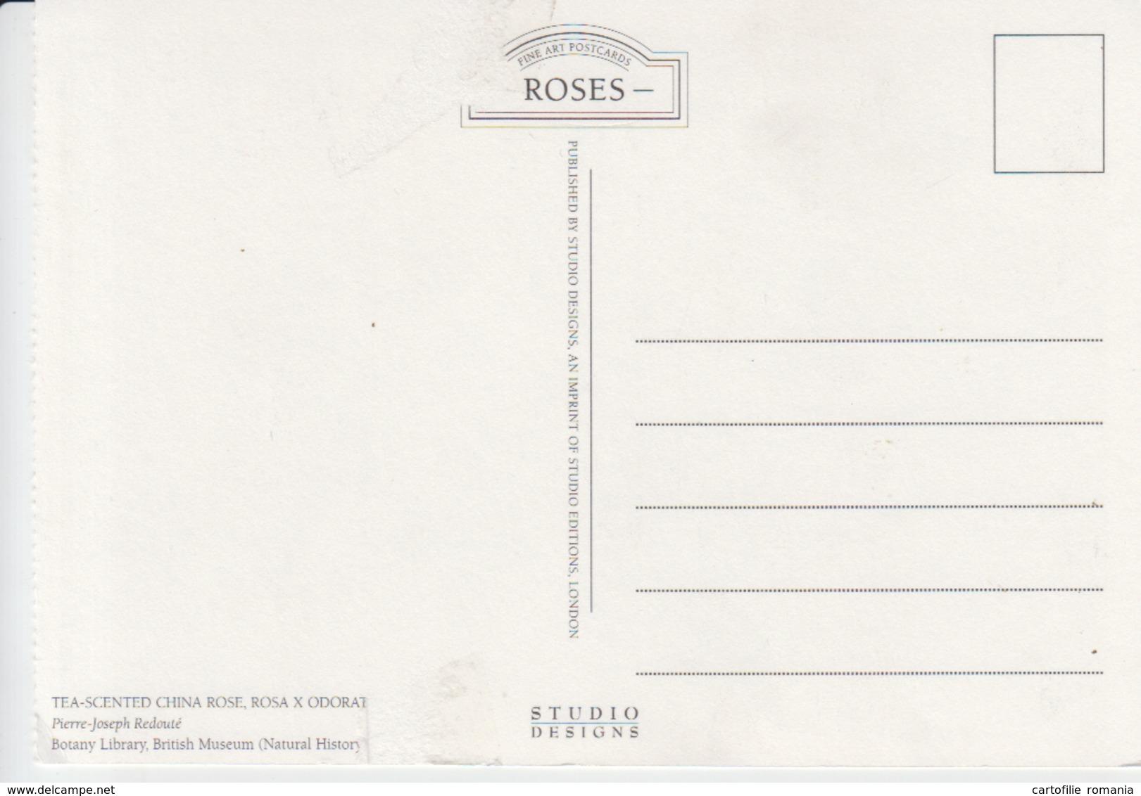 Pierre Joseph Redoute - Tea Scented China Rose, Rosa X Odorat Unused - Peintures & Tableaux
