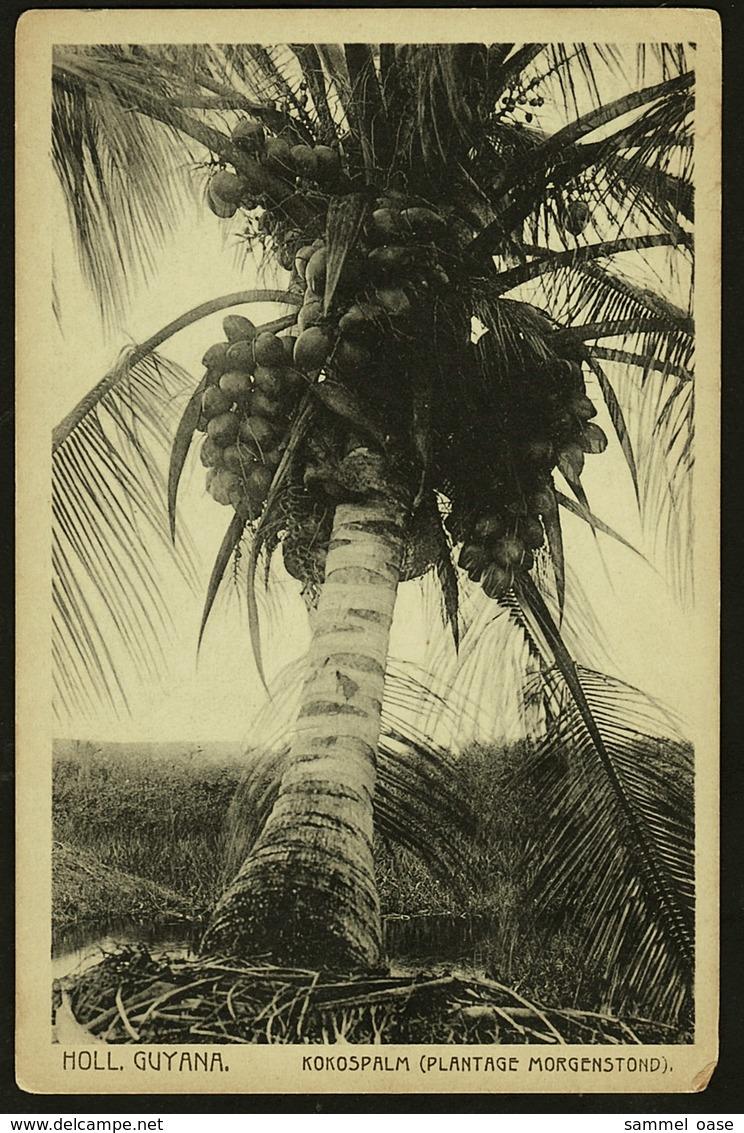 Holl. Guyana  -  Kokospalm  -  Plantage Morgenstond  -  Ansichtskarte Ca.1910    (9918) - Suriname