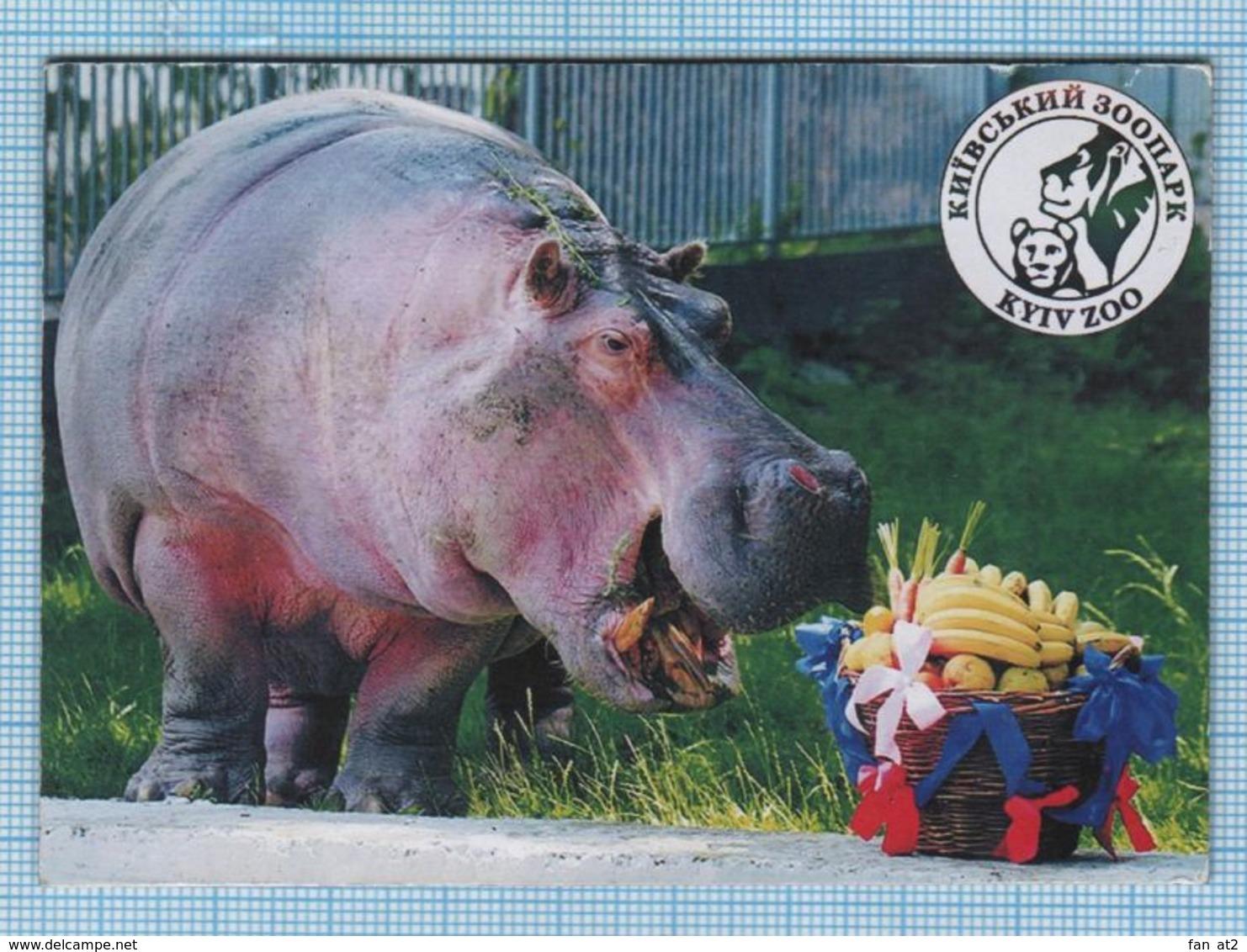 UKRAINE / Flexible Magnet / KYIV / Fauna. Zoo. Hippopotamus. - Animaux & Faune