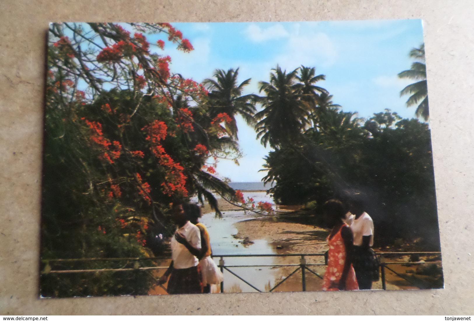 SCHOELCHER - Embouchure De La Rivière Touza  ( Martinique ) - Martinique
