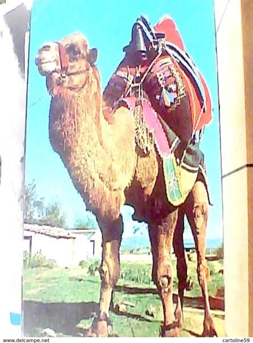 TUCHIA TURKIYE CAMMELLO  CAMEL V1973 HA8262 - Turchia