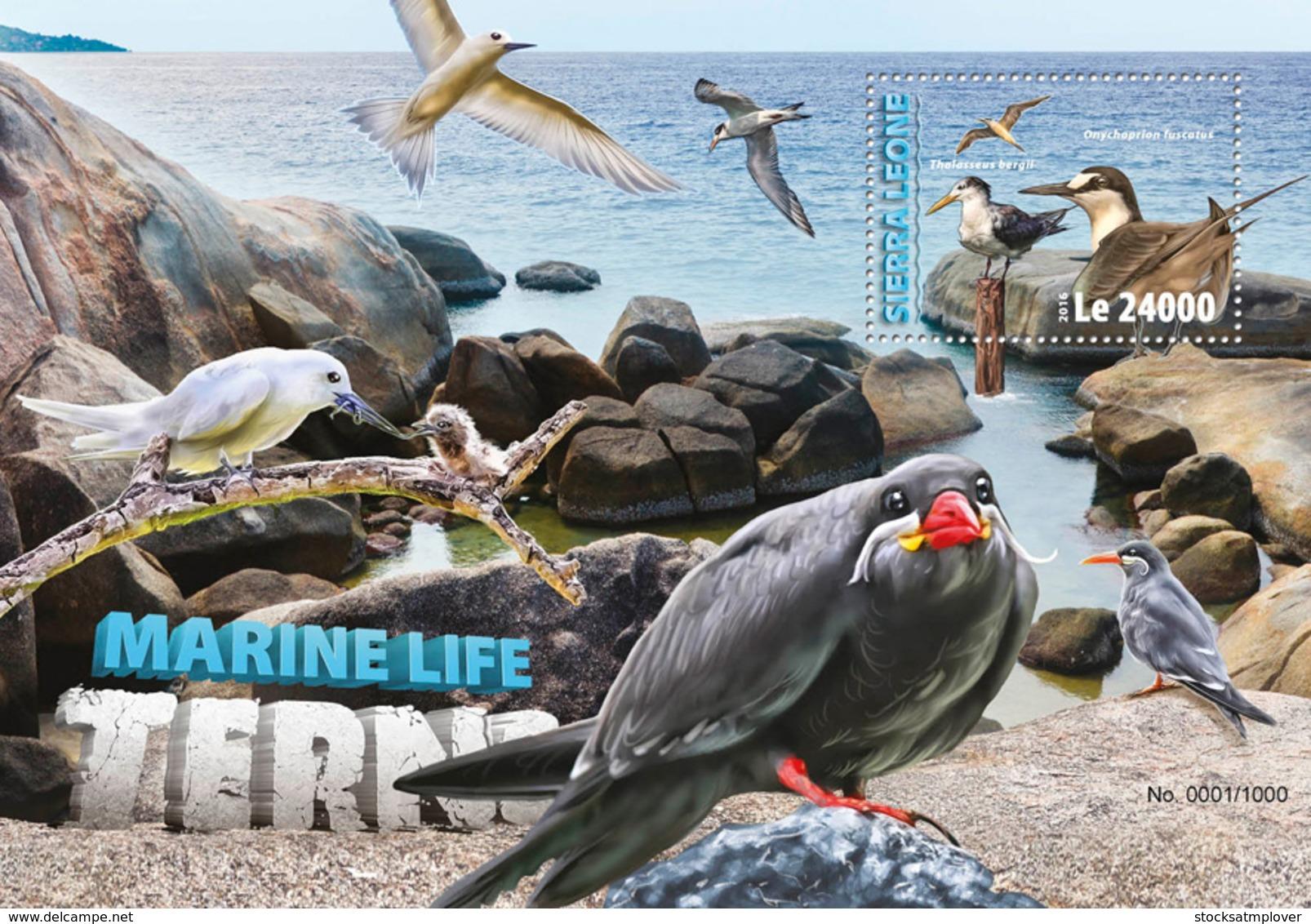 Sierra Leone 2016 Fauna Terns Sea Birds - Sierra Leone (1961-...)