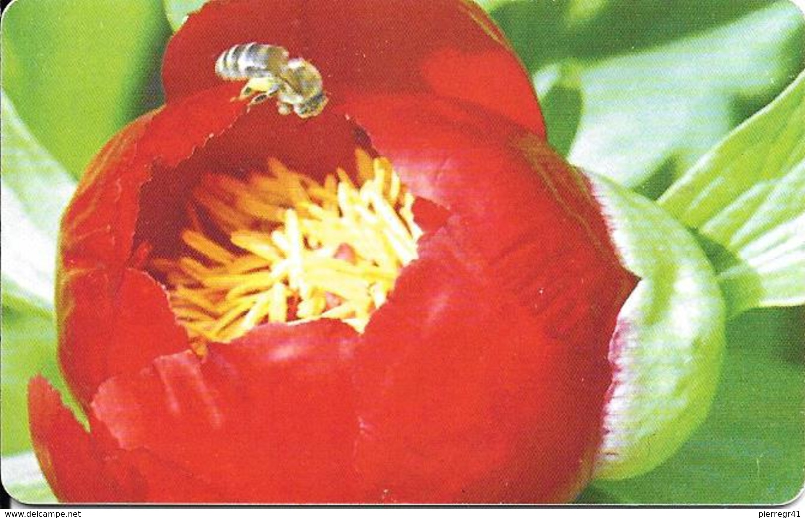 -CARTE-PUCE-ROUMANIE-80000 Lei-2003-Fleurs Rouges Genre FUSHIA-TBE - Fleurs