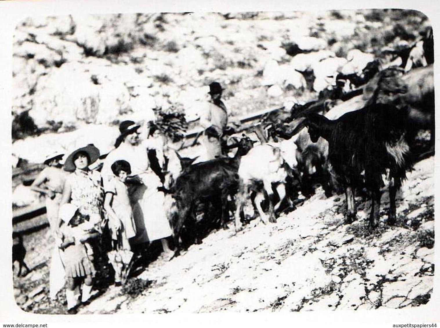 Photo Originale Portrait De La Famille Lafon Croisant Des Chèvres Dans La Calanque De Niolon à Le Rove (13740) Vers 1936 - Personnes Identifiées