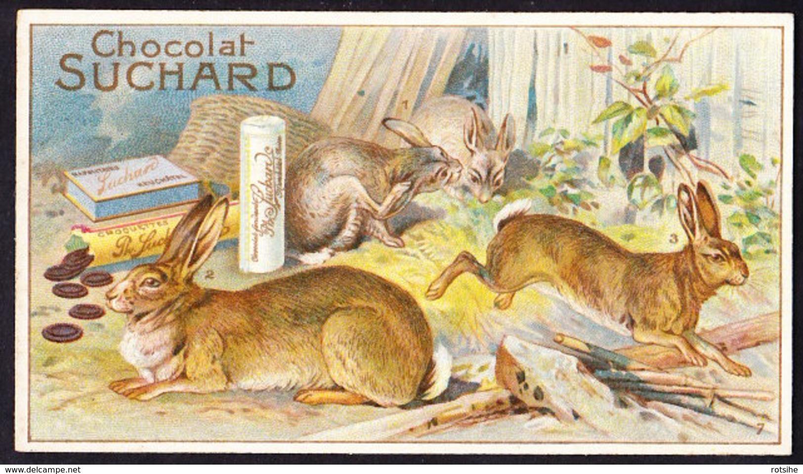 CHROMO Chocolat SUCHARD   Lapins   Serie 147   Rabbits - Suchard