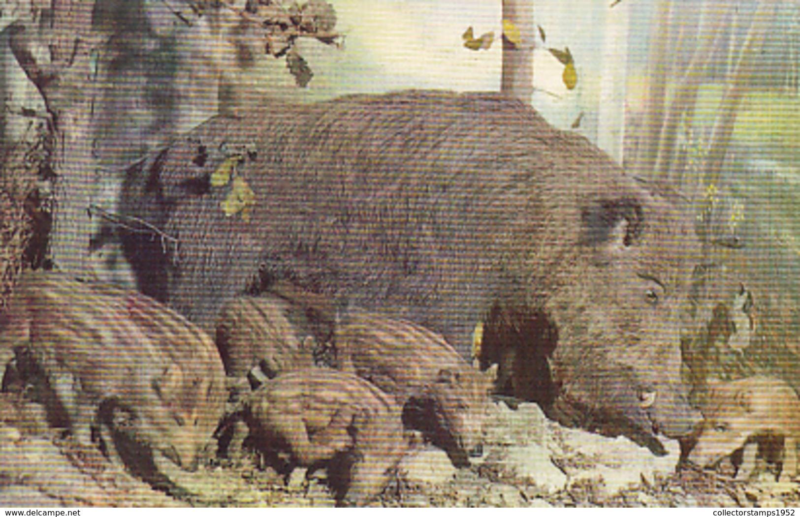 77115- WILD BOAR, WILD PIG, PIGLETS, ANIMALS - Cochons