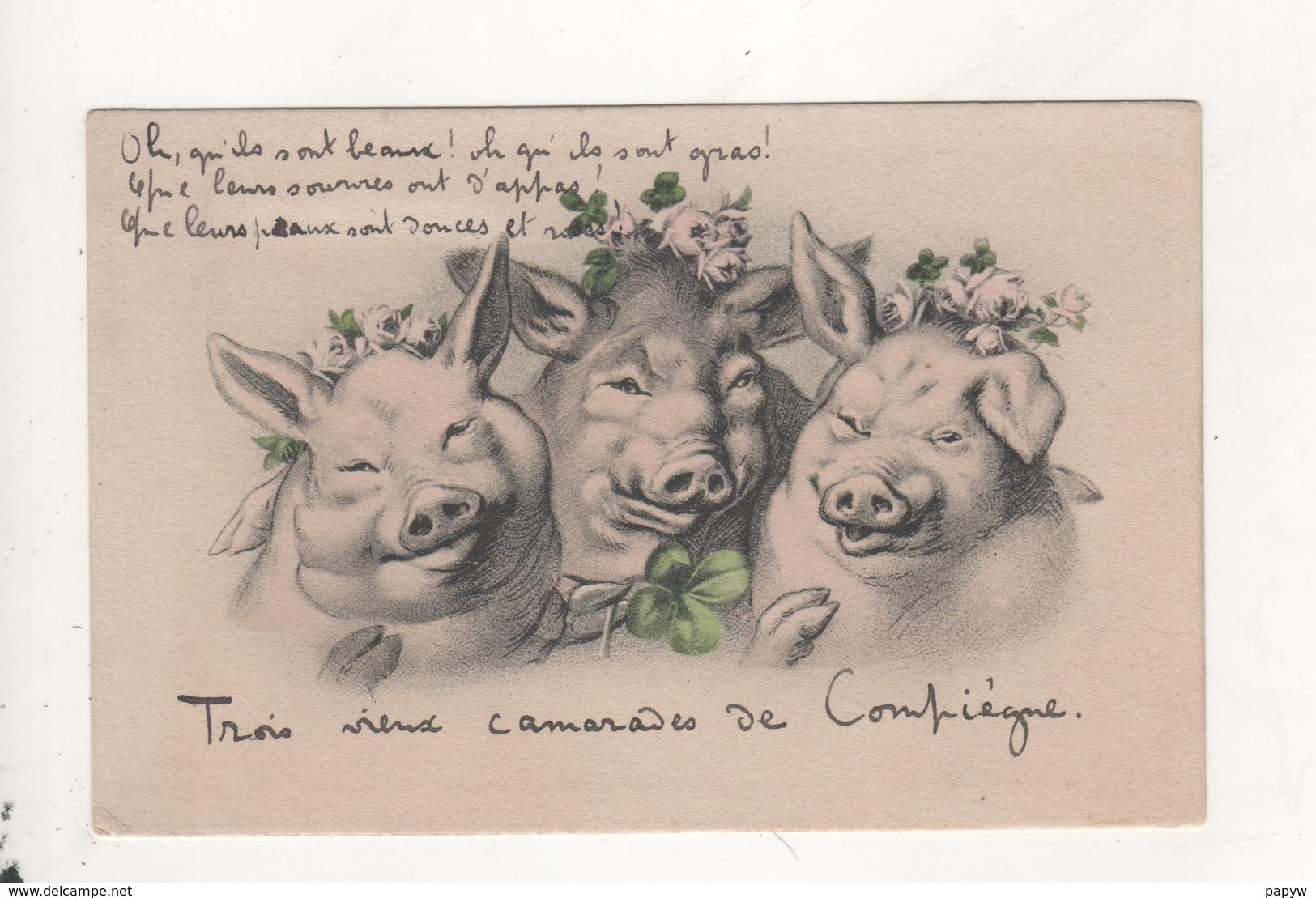 Cochons Trois Vieux Camarades De Compiegne - Cochons