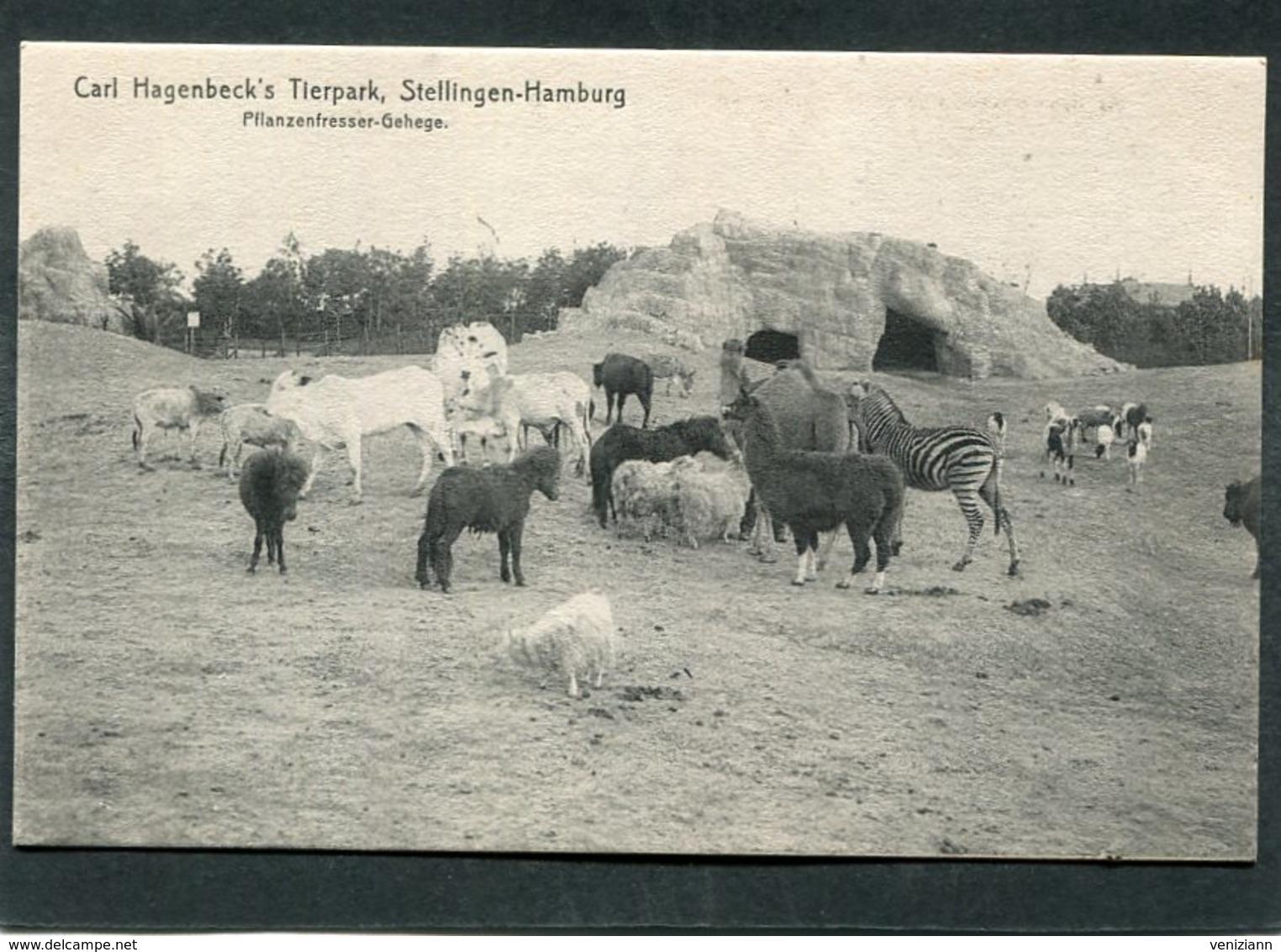CPA - STELLINGEN - HAMBURG - Carl Hagenbeck's Tierpark - Pfanzenfresser Gehege - Stellingen
