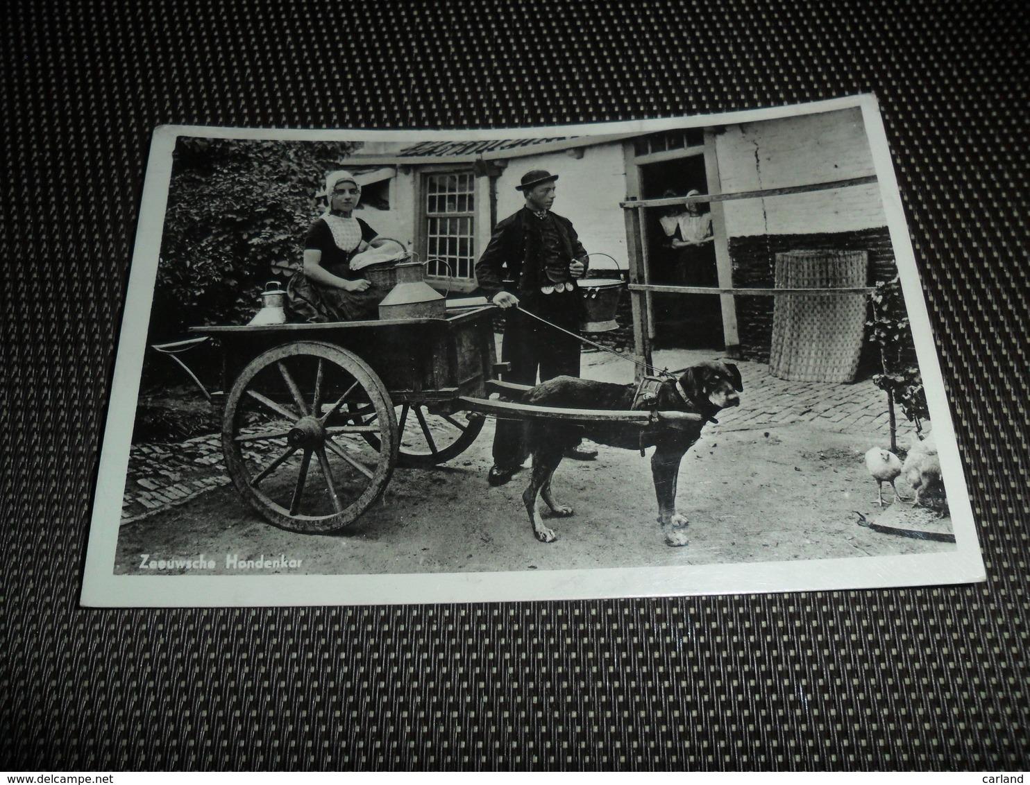 Nederland ( 923 )     Zeeuwsche Hondenkar   Attelage De Chien - Nederland