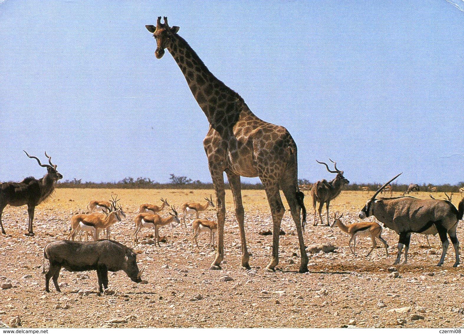 Namibia - Etosha National Park - Namibie