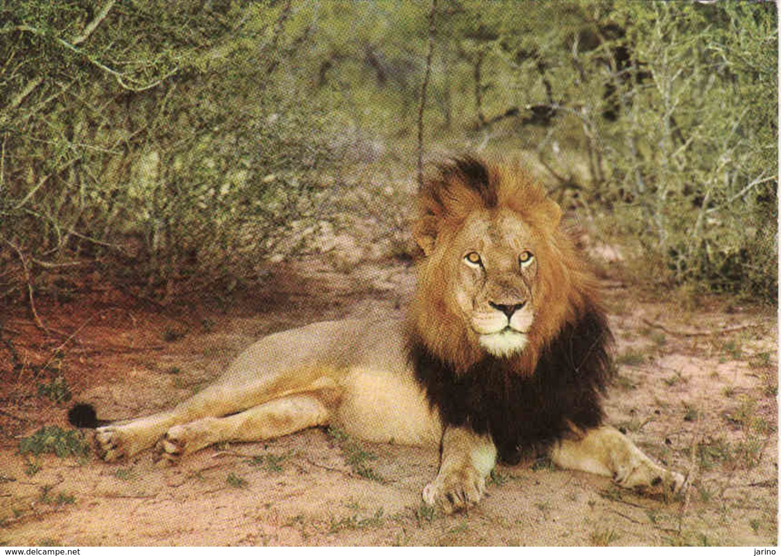 Lion, Löwe, Leon Unused - Lions