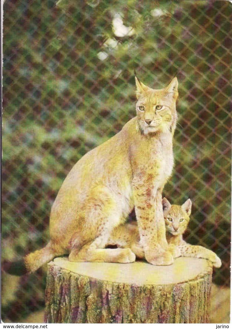 Lynx, Lince, Luchs, Zoologischer Garten Dresden, Unused - Lions