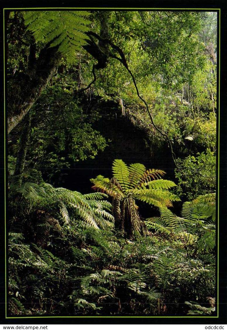 Ferns In Grand Canyon Blue Mountains NSW  Austrakia RV Beau Timbre (Papillon) - Australie
