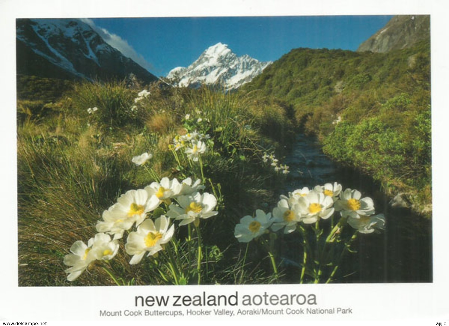 Mount Cook / Aoraki  (boutons D'or)  The Highest Mountain In New Zealand, Adressée Andorra,avec Timbre à Date Arrivée - Alpinisme