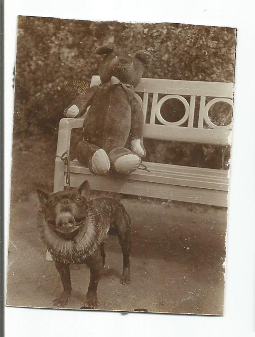Old Original Photo Serbia - 1930s - Dog - Anonieme Personen