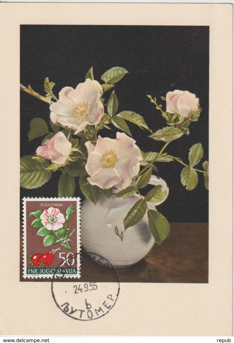 Yougoslavie Carte Maximum Fleurs 1955 Eglantine 673 - Cartes-maximum