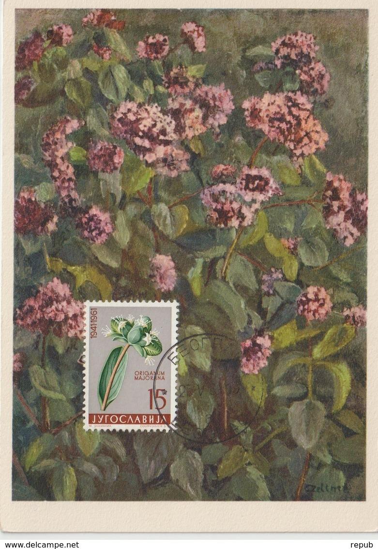 Yougoslavie Carte Maximum Fleurs 1961 Origan 844 - Cartes-maximum