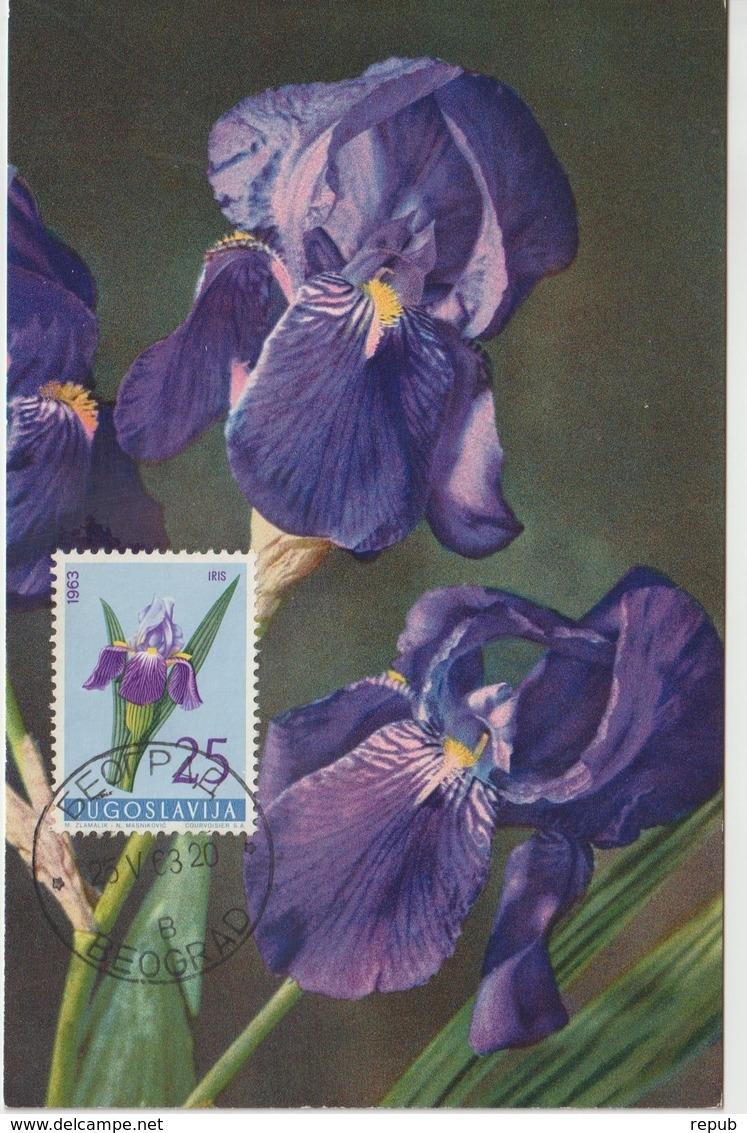Yougoslavie Carte Maximum Fleurs 1963 Iris 932 - Cartes-maximum