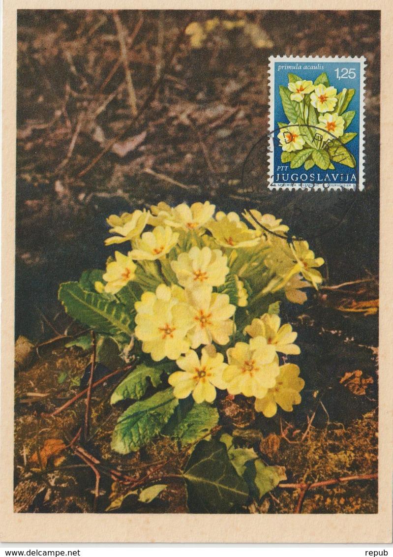 Yougoslavie Carte Maximum Fleurs 1969 Primevère 1226 - Cartes-maximum
