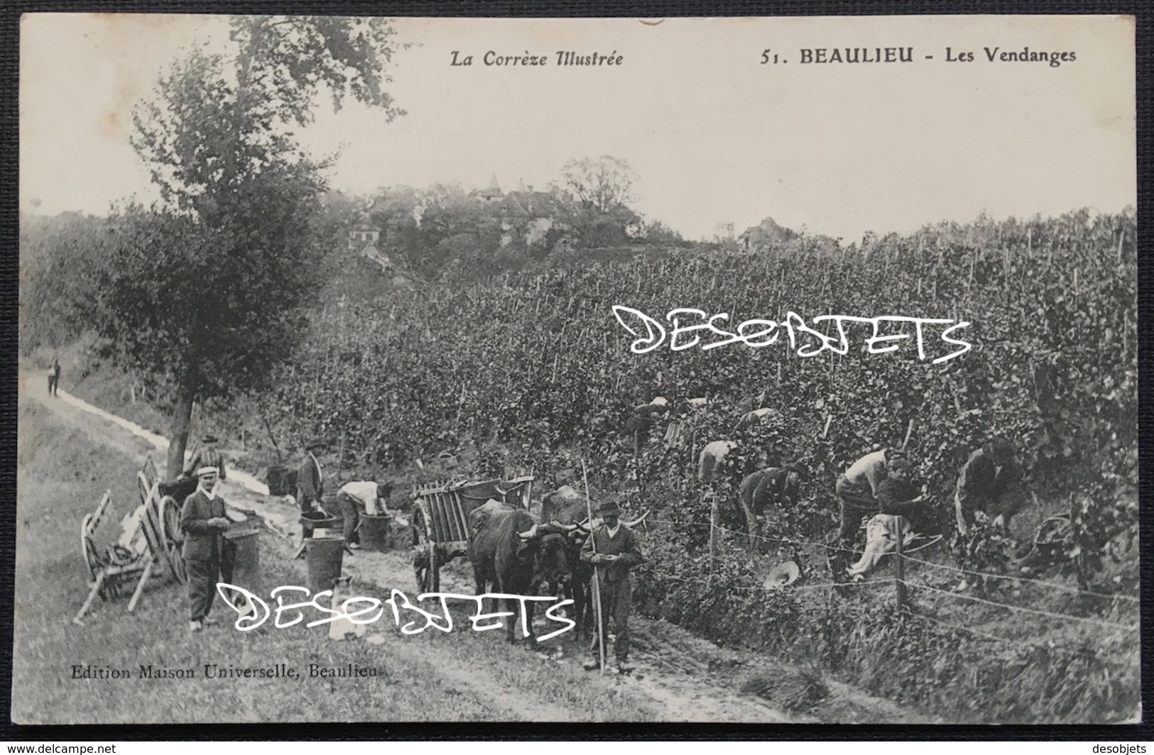 La Corrèze Illustrée  51. BEAULIEU - Les Vendanges - France