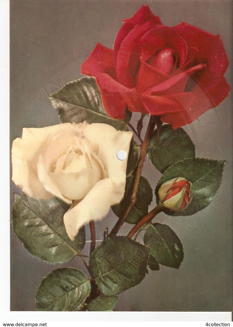 Old Musical 45rpm Record Postcard Schallbildkarte Roses Birthday Geburtstag Alles Gute Alfred Jacksch-Hans Gorling - Vinyl Records