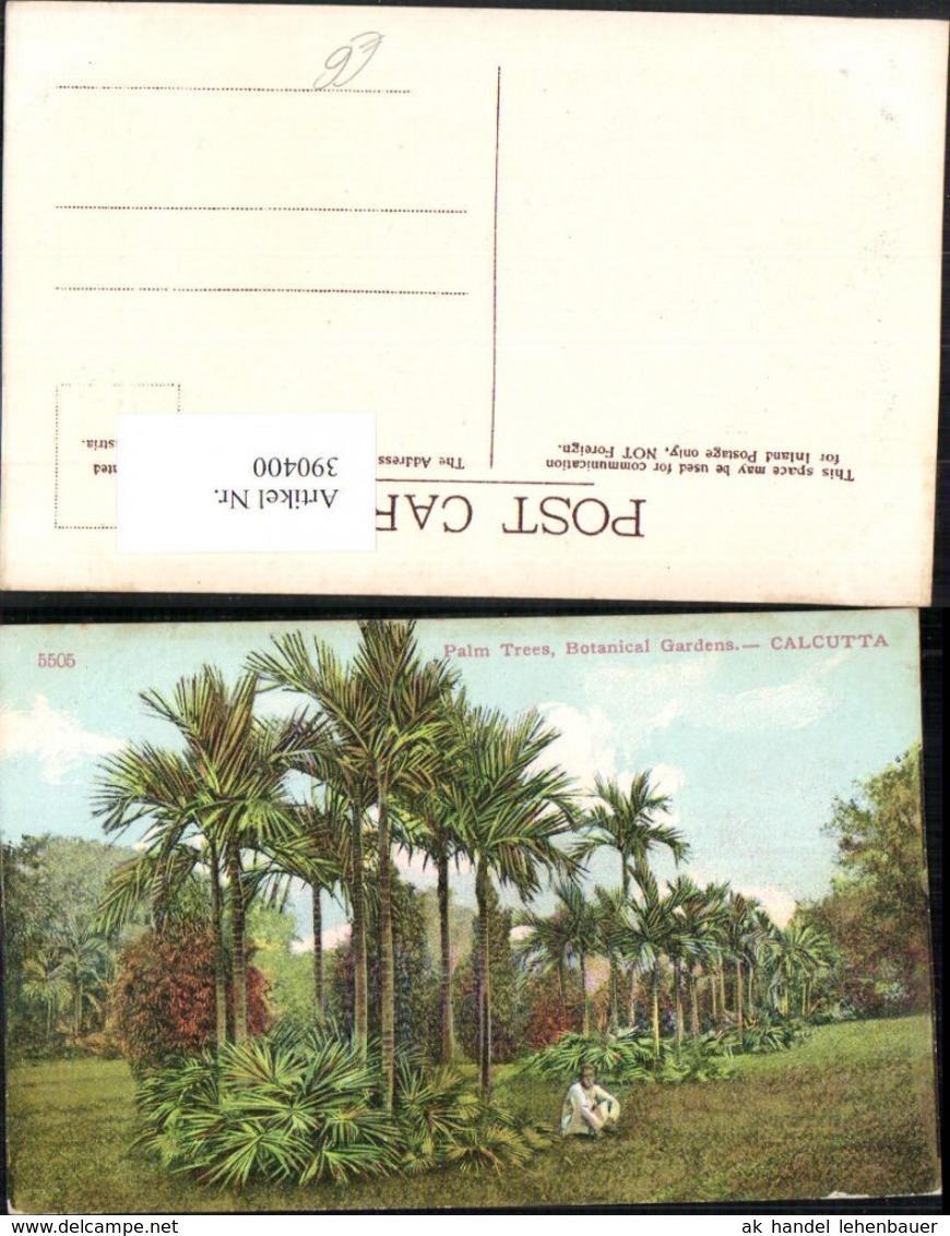 390400,India Calcutta Kalkutta Botanical Gardens Palm Trees Palmen - Indien