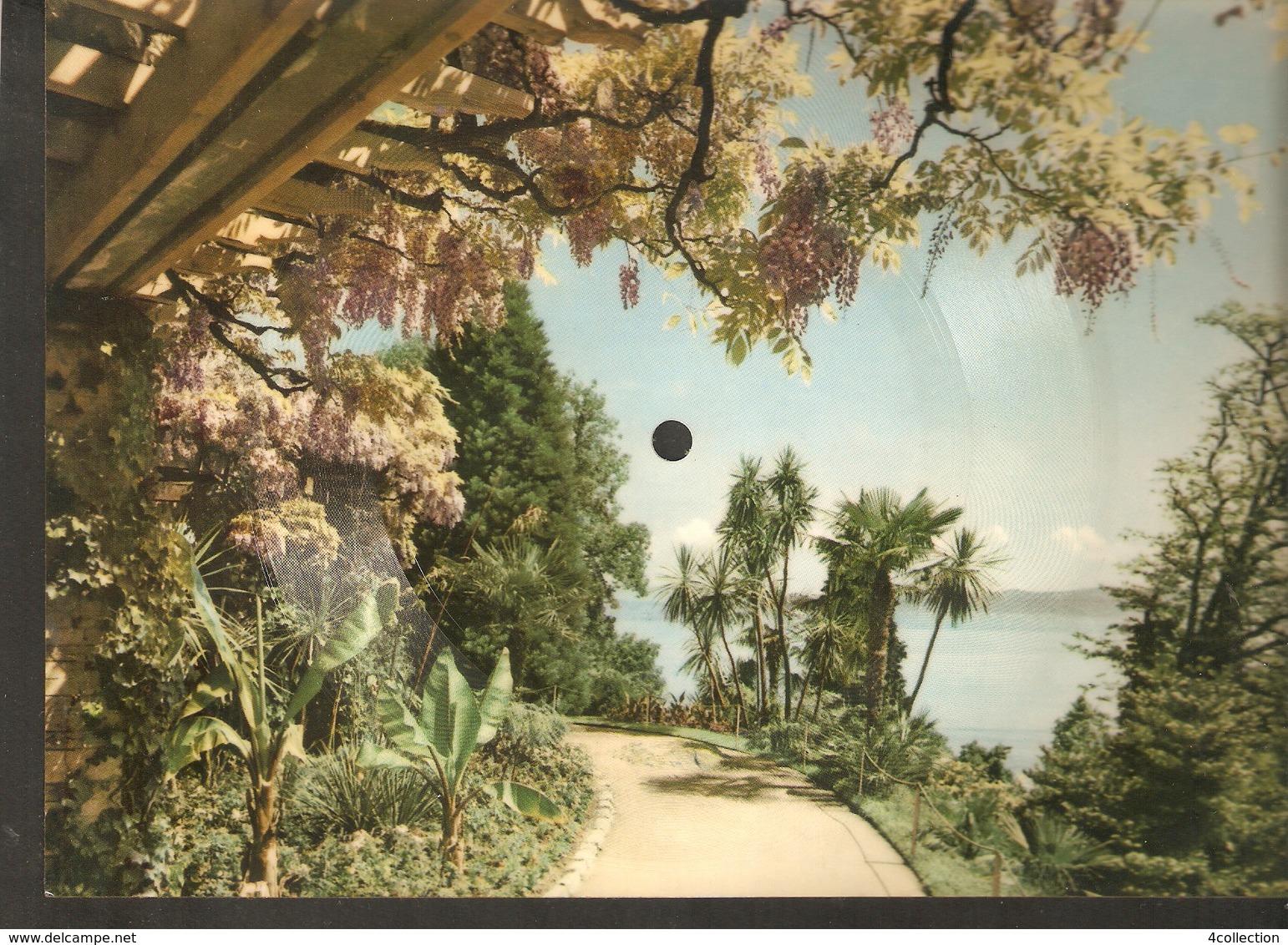 Old Musical 45rpm Record Postcard Schon Und Kaffeebraun Calypso Mercer Bradtke Schallbildkarte Insel Mainau In Bodensee - Unclassified
