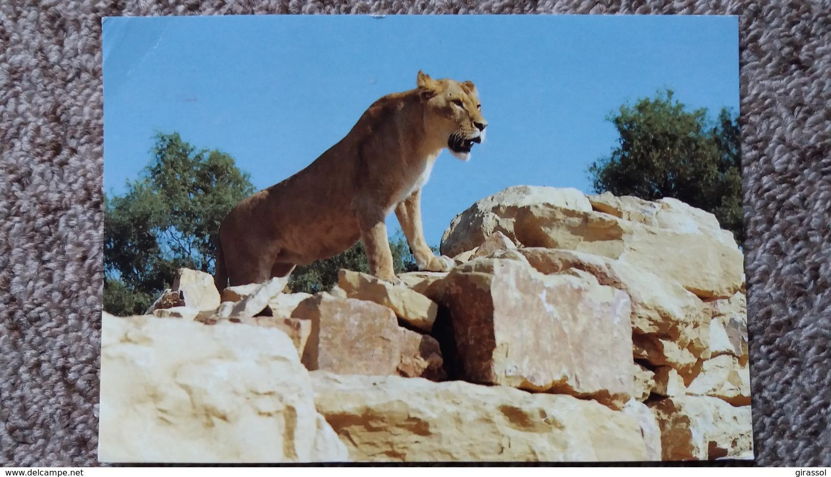 CPM LION LIONNE TOURA PARC ROMANECHE PARC ZOOLOGIQUE ZOO ED EDIVEL - Lions