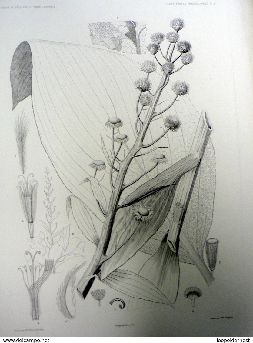 DUMONT D'URVILLE - HERBIER - BOTANIQUE : POLE SUD Et OCEANIE (1837/1840). 62 Lithographies Originales. - B. Flower Plants & Flowers