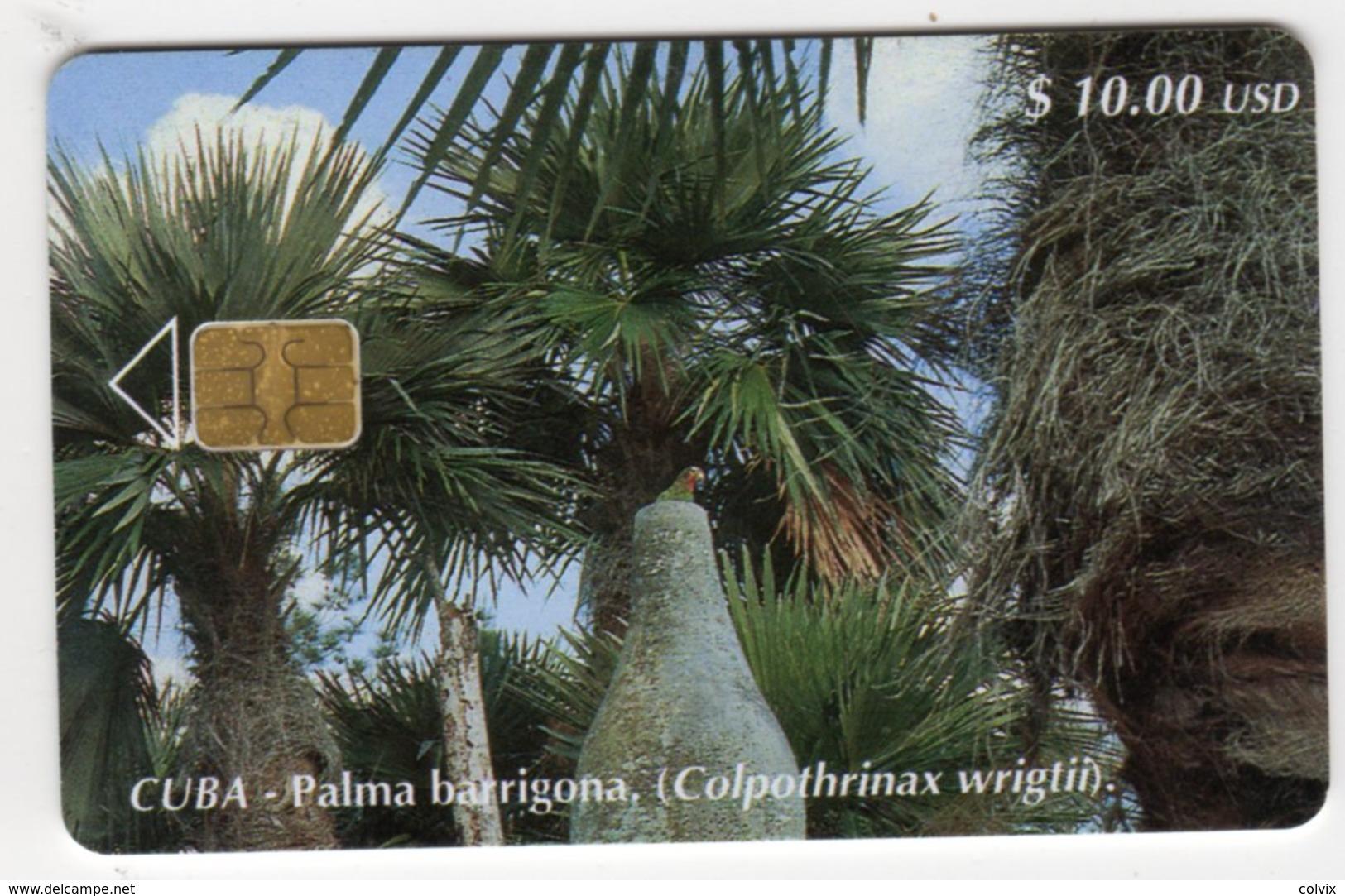 CUBA PALMA BARRIGONA 10$ - Cuba