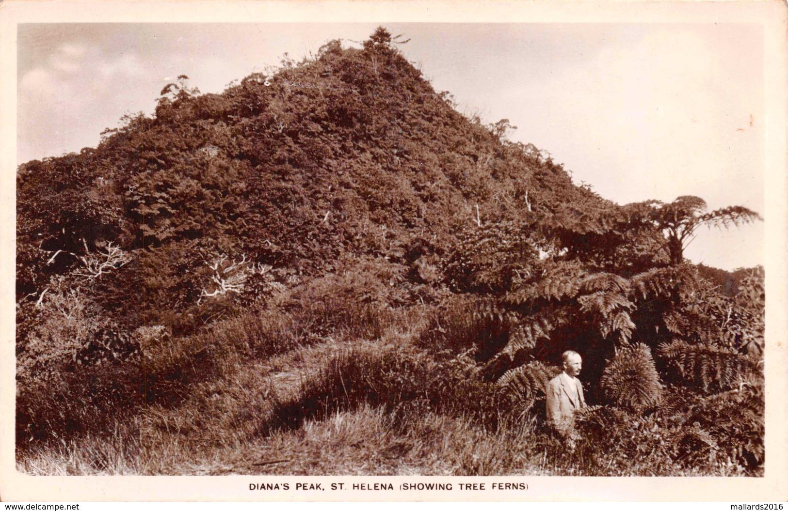 ST. HELENA - DIANA'S PEAK & TREE FERNS ~ A REAL PHOTO POSTCARD #92811 - St. Helena