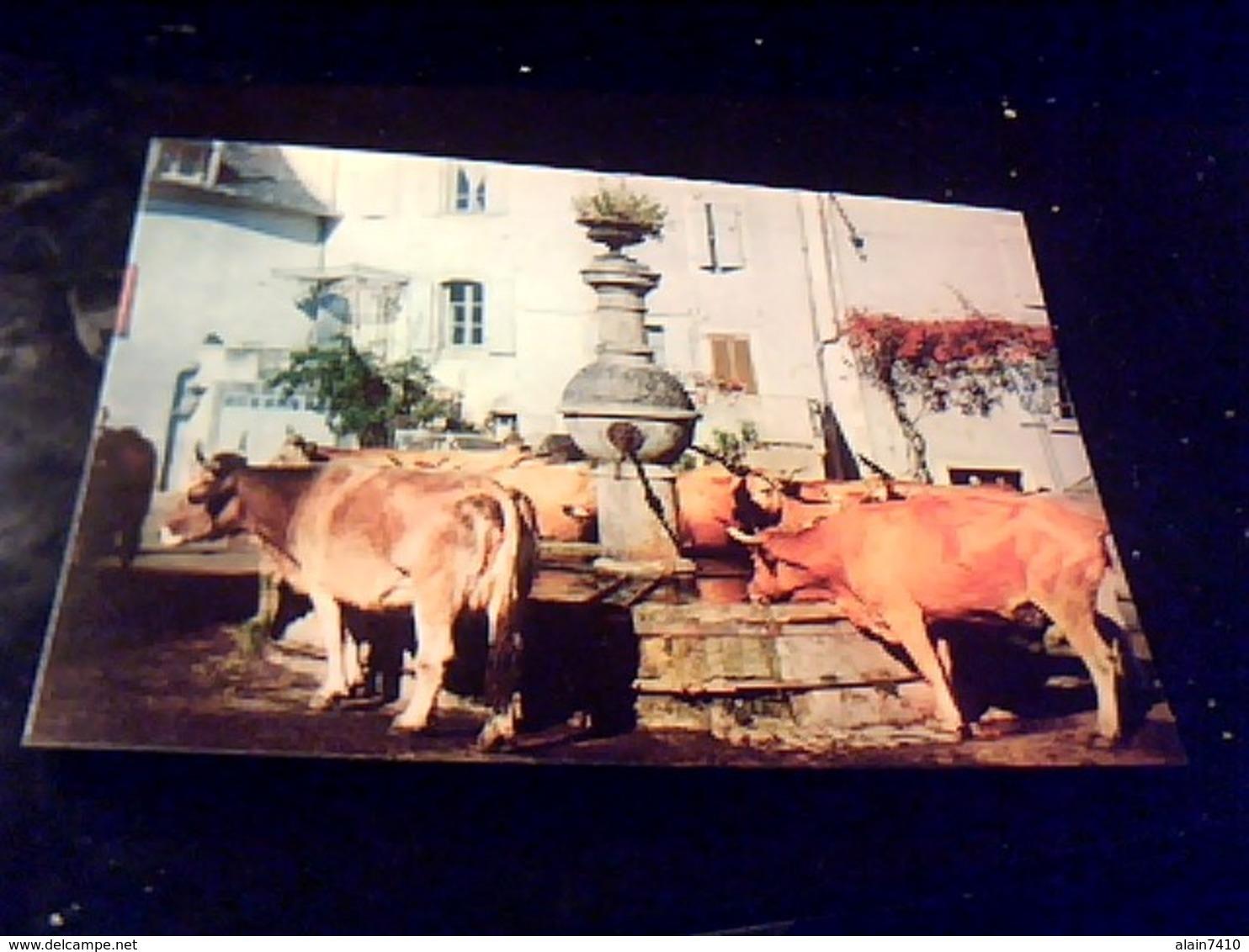 Cpa Non Ecrite Couleur  Severac L'eglise Vaches  D'aubrac A La Fontaine La France Touristique Aveyron - Autres Communes