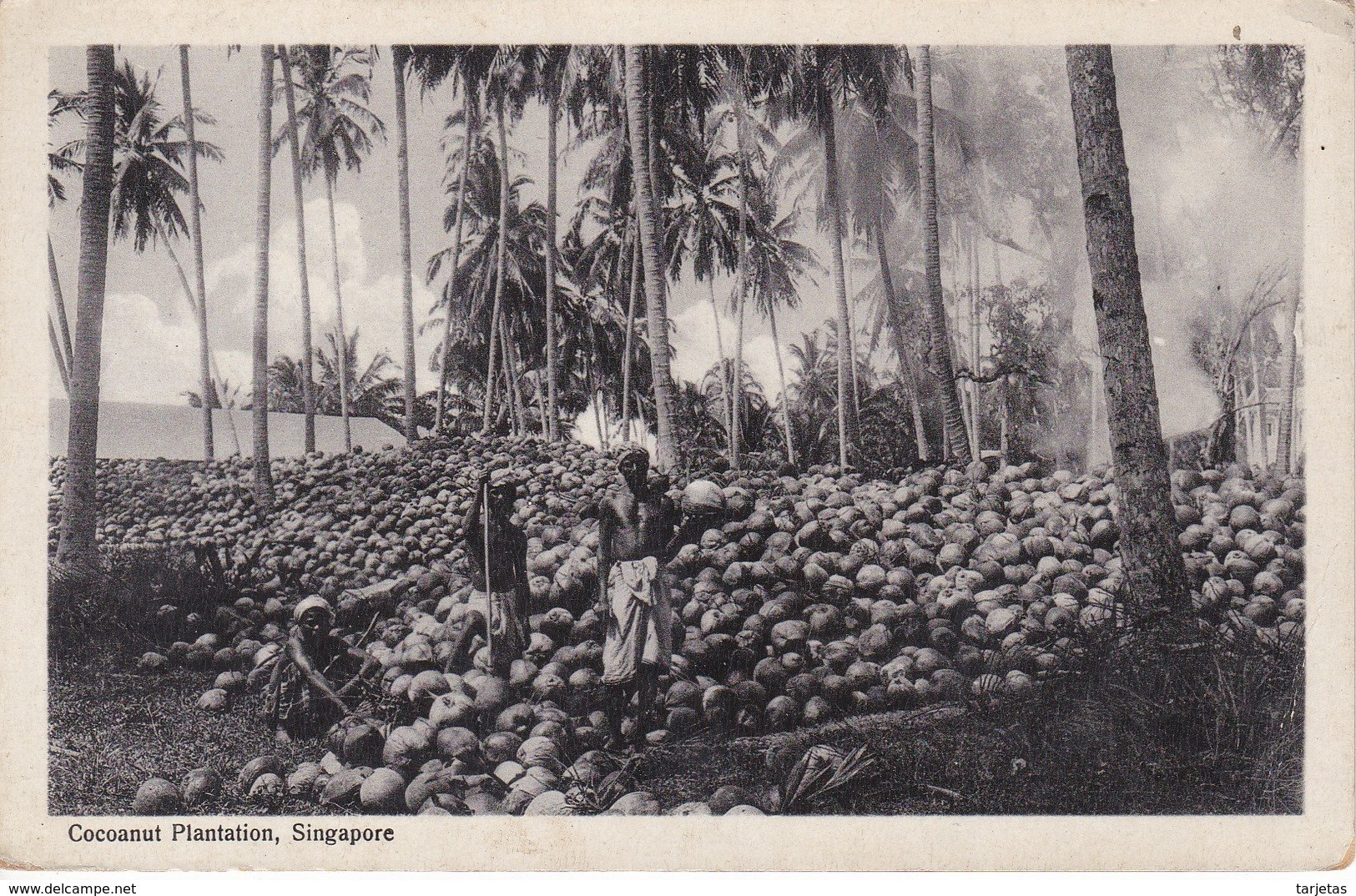 POSTAL DE SINGAPORE DE COCOANUT PLANTATION (SINGAPUR) COCO - Singapur