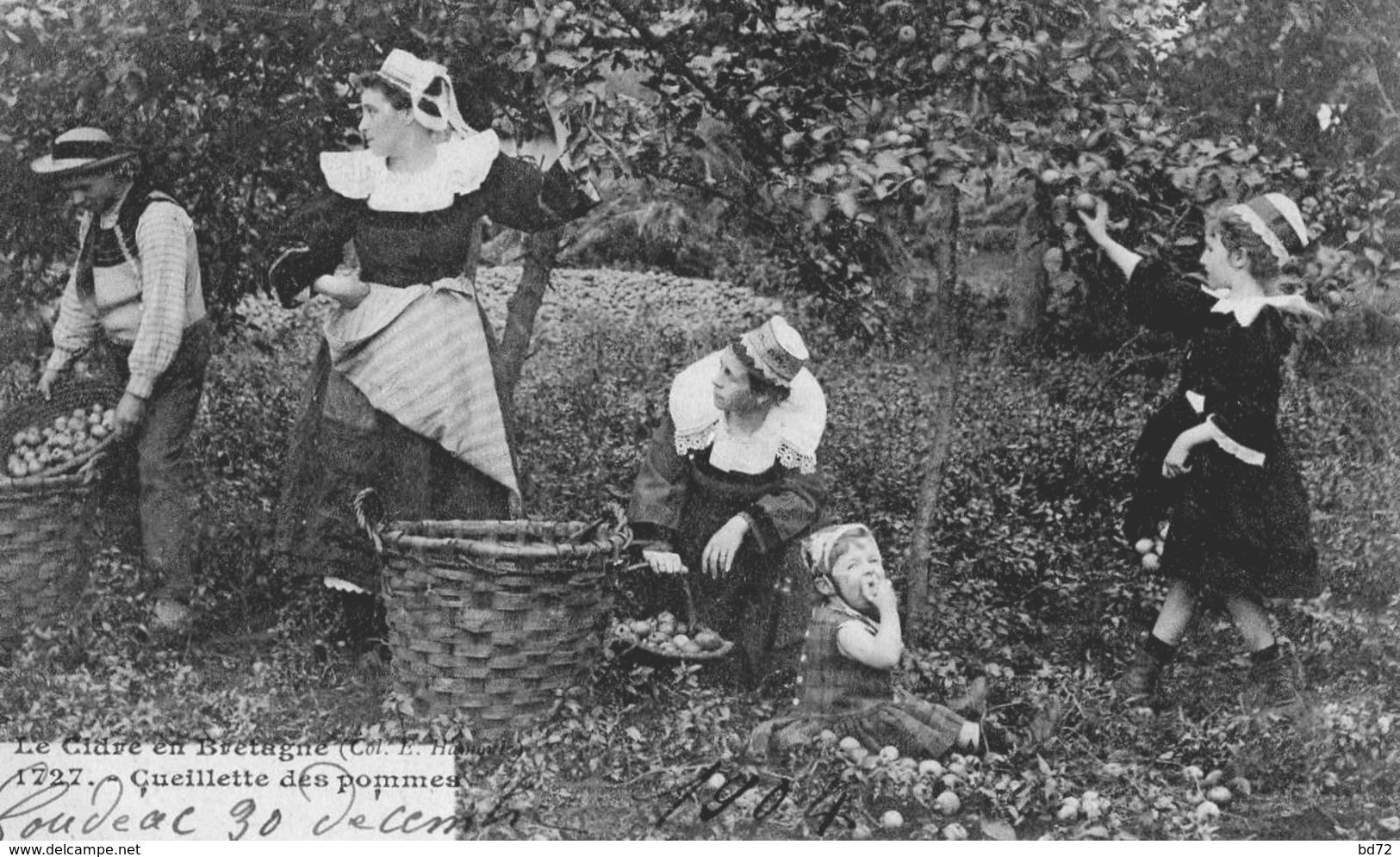 Le Cidre En Bretagne, Cueillette Des Pommes ( écrite De LOUDEAC ) - Loudéac