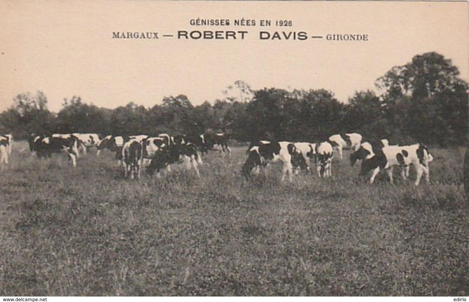 ***  ELEVAGE  ***  Génisses Nées En 1926 -MARGAUX  Robert DAVIS  Gironde *** 33 ***  Neuve/unused Excellent état - France