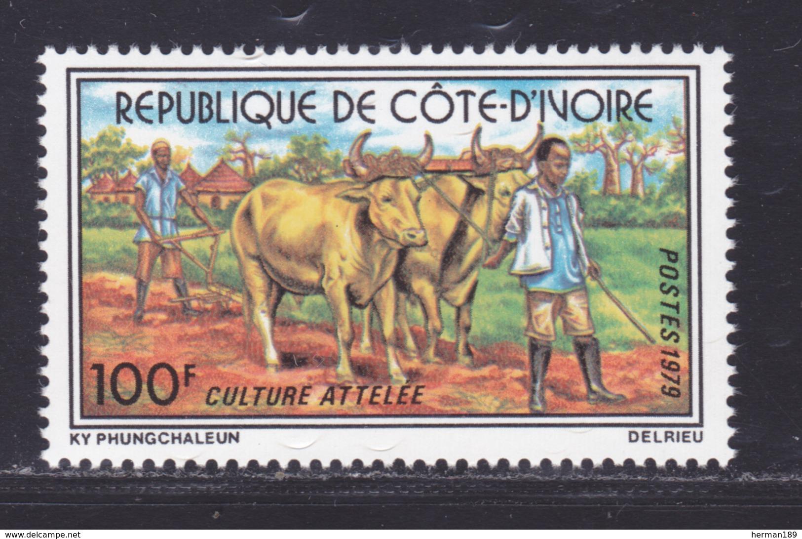 COTE D'IVOIRE N°  479 ** MNH Neuf Sans Charnière, TB (D8896) Culture Attelée - 1979 - Costa De Marfil (1960-...)