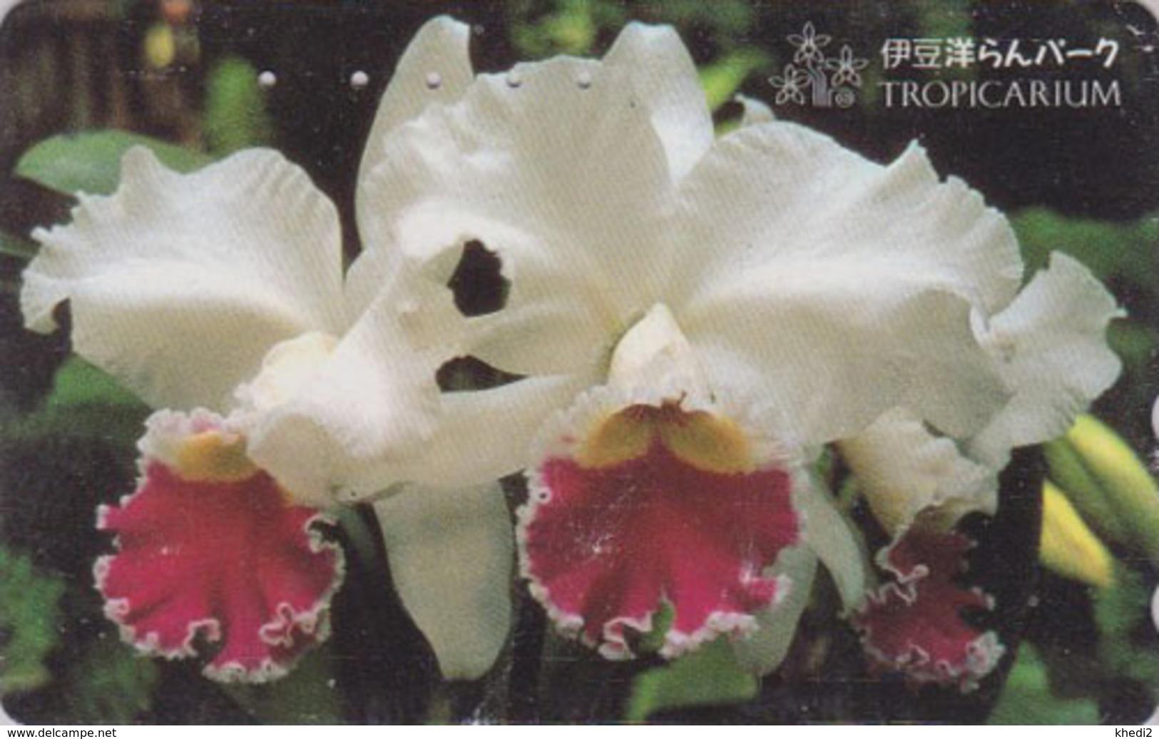 Télécarte Japon / 110-016 - FLEUR -  ORCHIDEE **  Série TROPICARIUM  IZU ORCHID PARK ** - FLOWER Japan Phonecard - 2432 - Fleurs