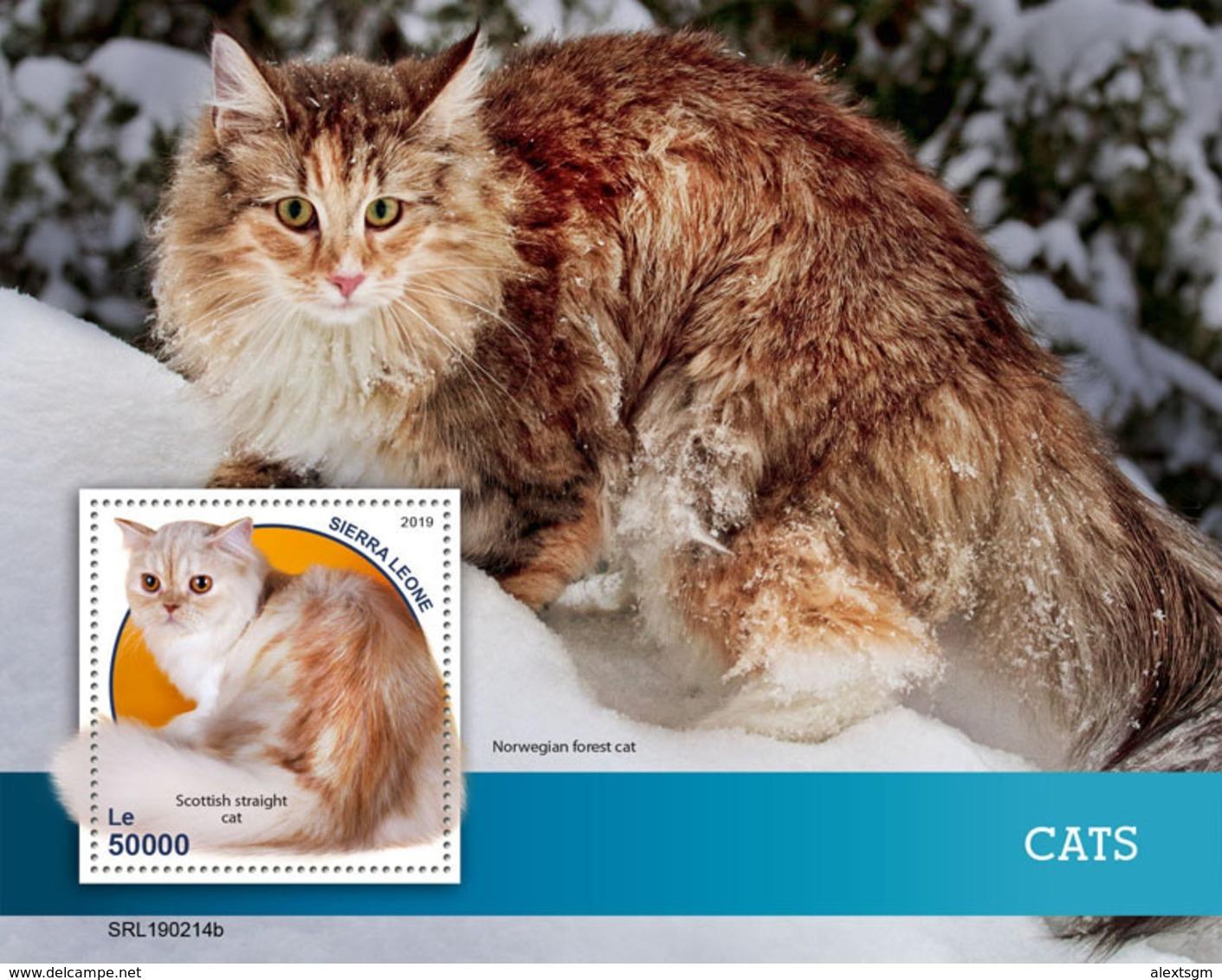 SIERRA LEONE 2019 - Cats S/S. Official Issue. - Katten