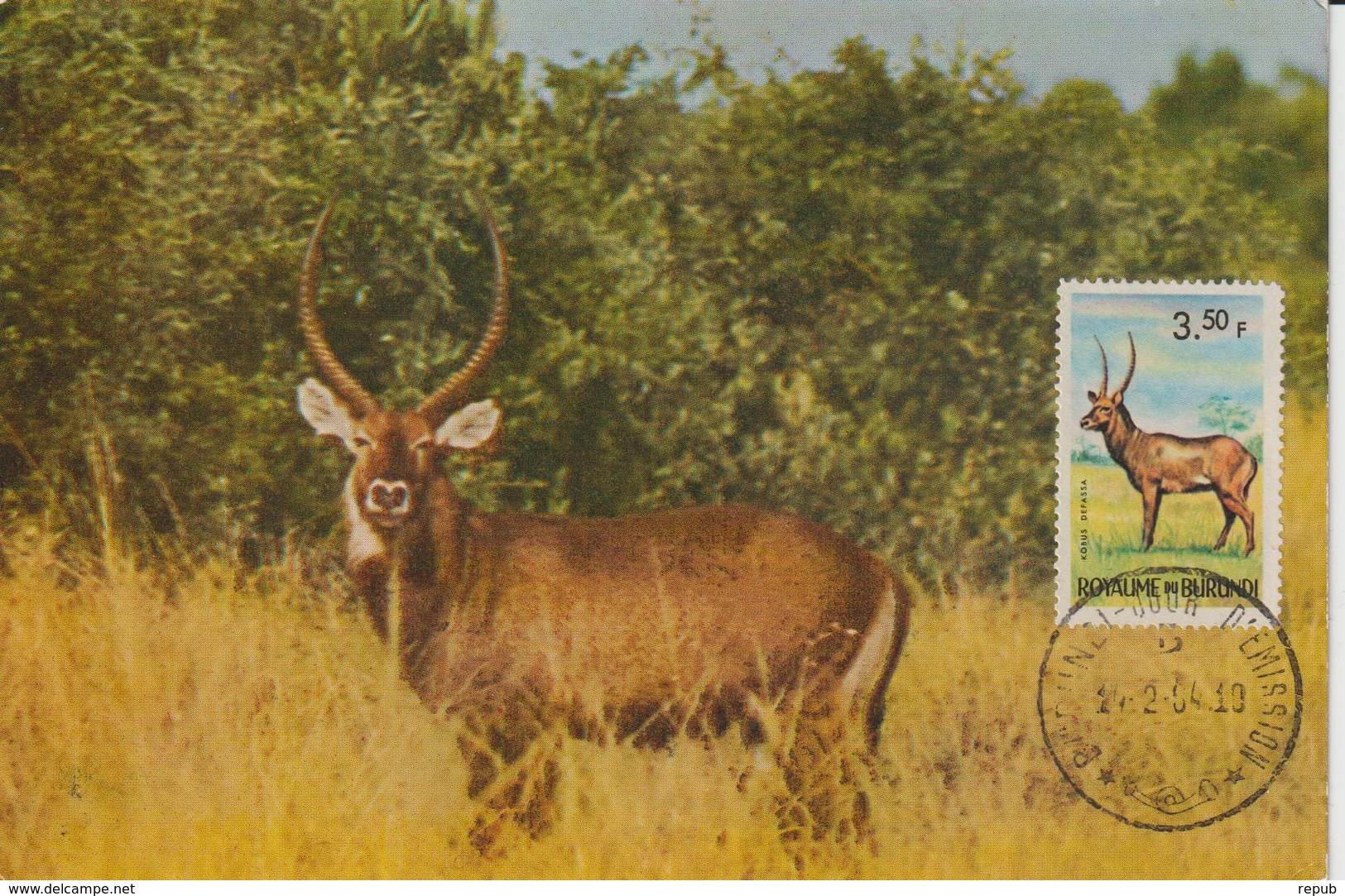 Burundi Carte Maximum Animaux 1964 Kobus 85 - Burundi