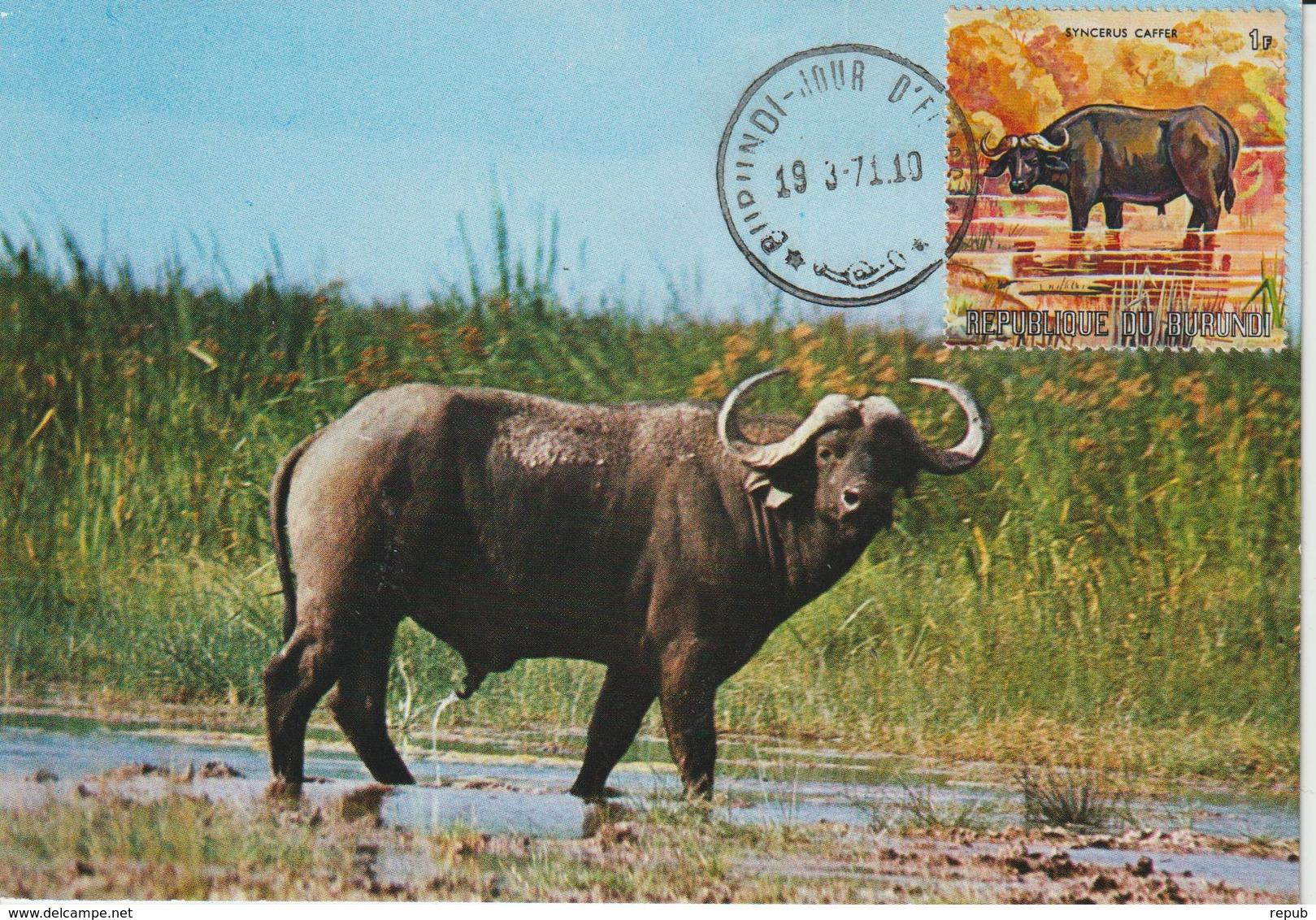 Burundi Carte Maximum Animaux 1971 Buffle 435 - Autres