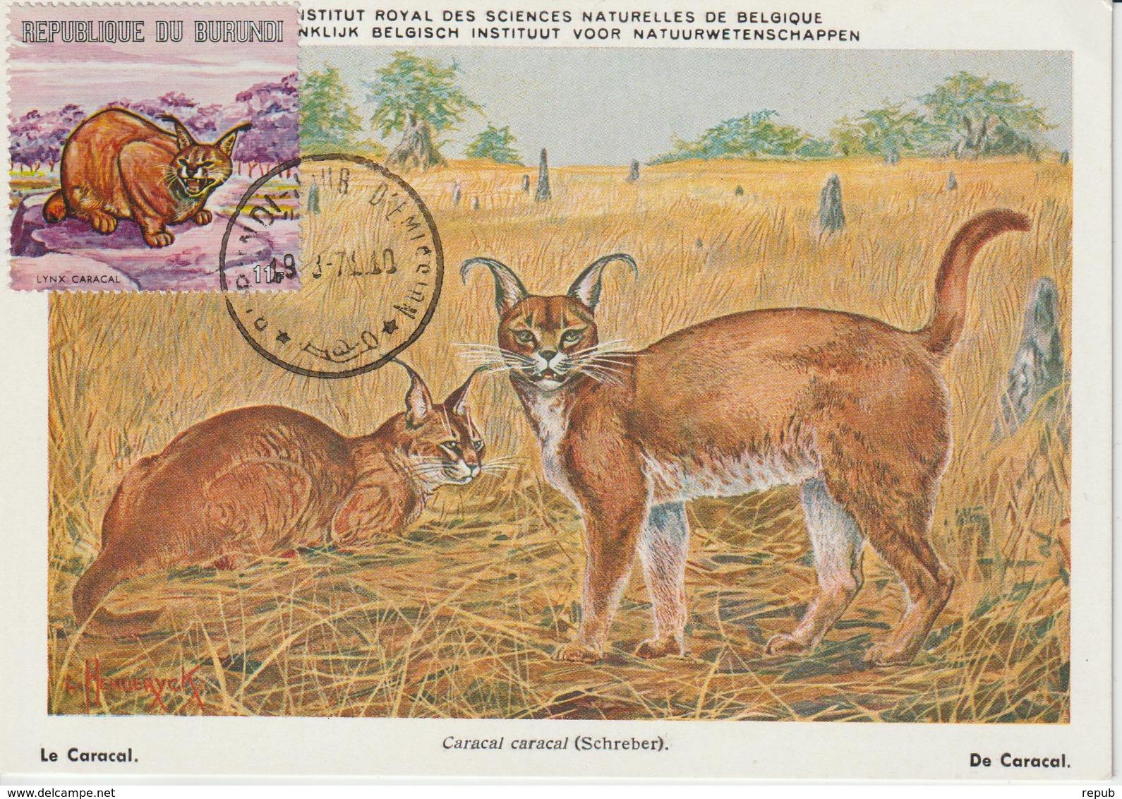 Burundi Carte Maximum Animaux 1971 Caracal 455 - Burundi