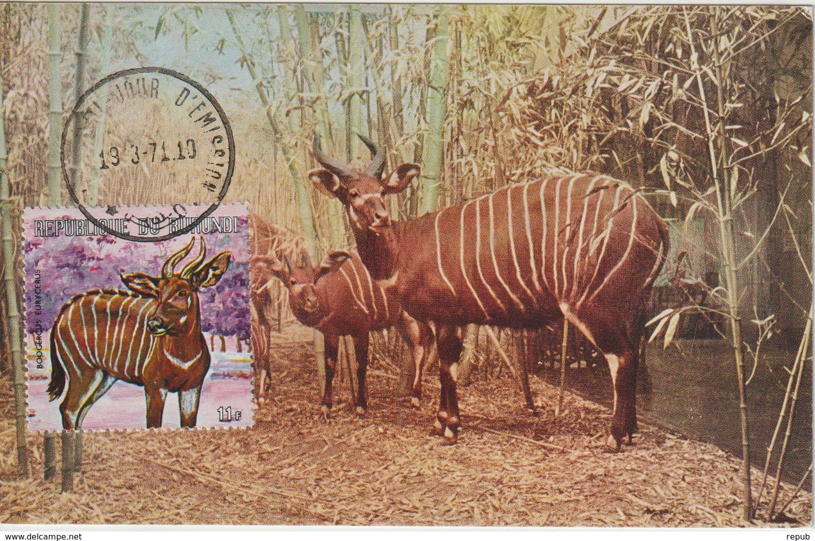 Burundi Carte Maximum Animaux 1971 Bongo 457 - Burundi