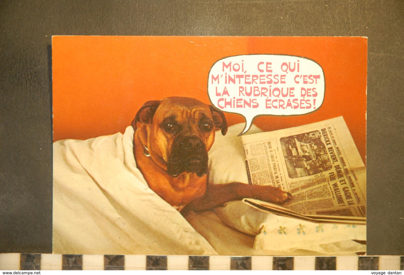 CP,  Chiens, Chien, Humour, Journal, Moi Ce Qui M'interesse C'est La Rubrique Des Chiens Ecrases, Humour, - Chiens