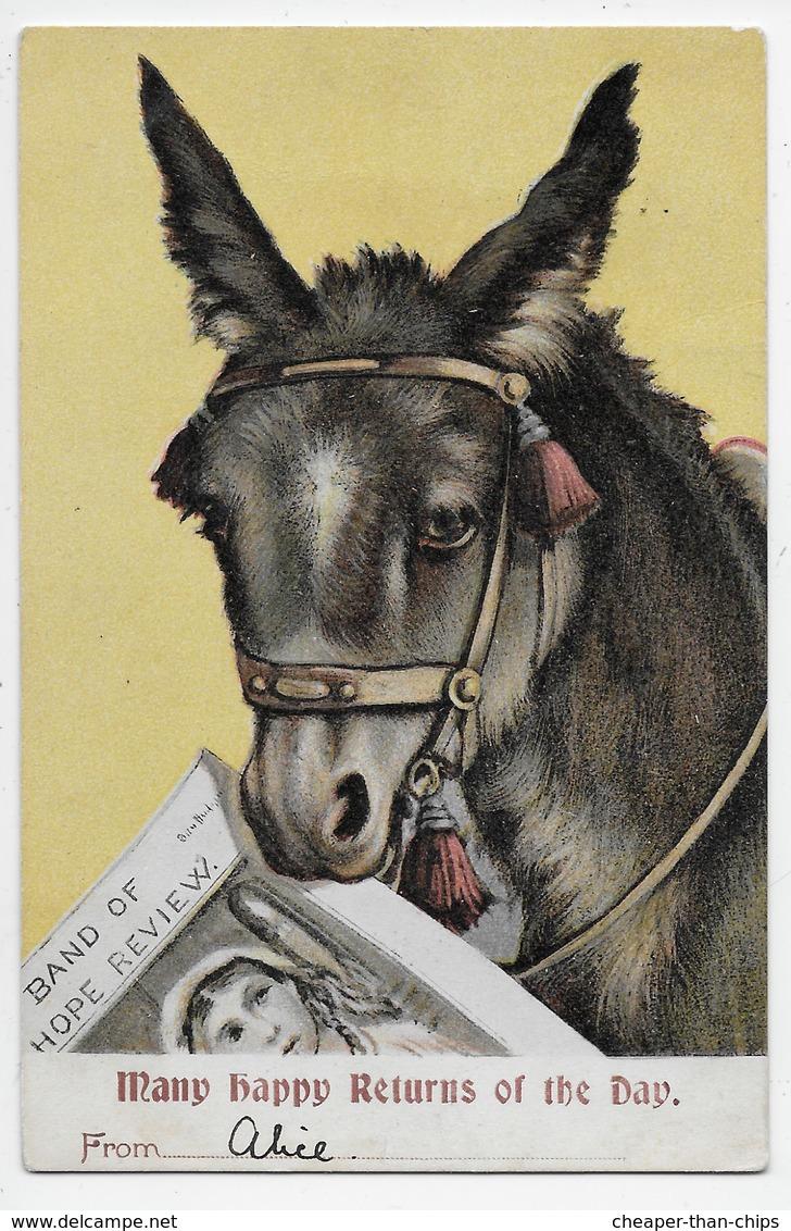 Donkey - Greetings Card - Undivided Back - Donkeys