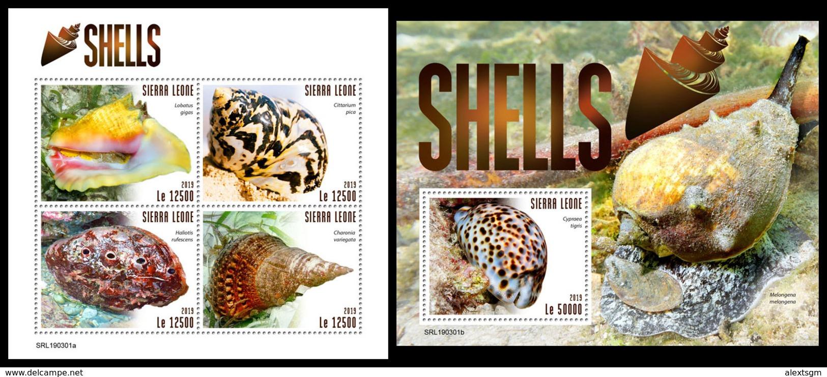 SIERRA LEONE 2019 - Shells. M/S + S/S Official Issue. - Schelpen