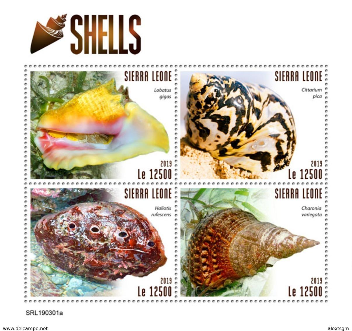 SIERRA LEONE 2019 - Shells. Official Issue. - Schelpen