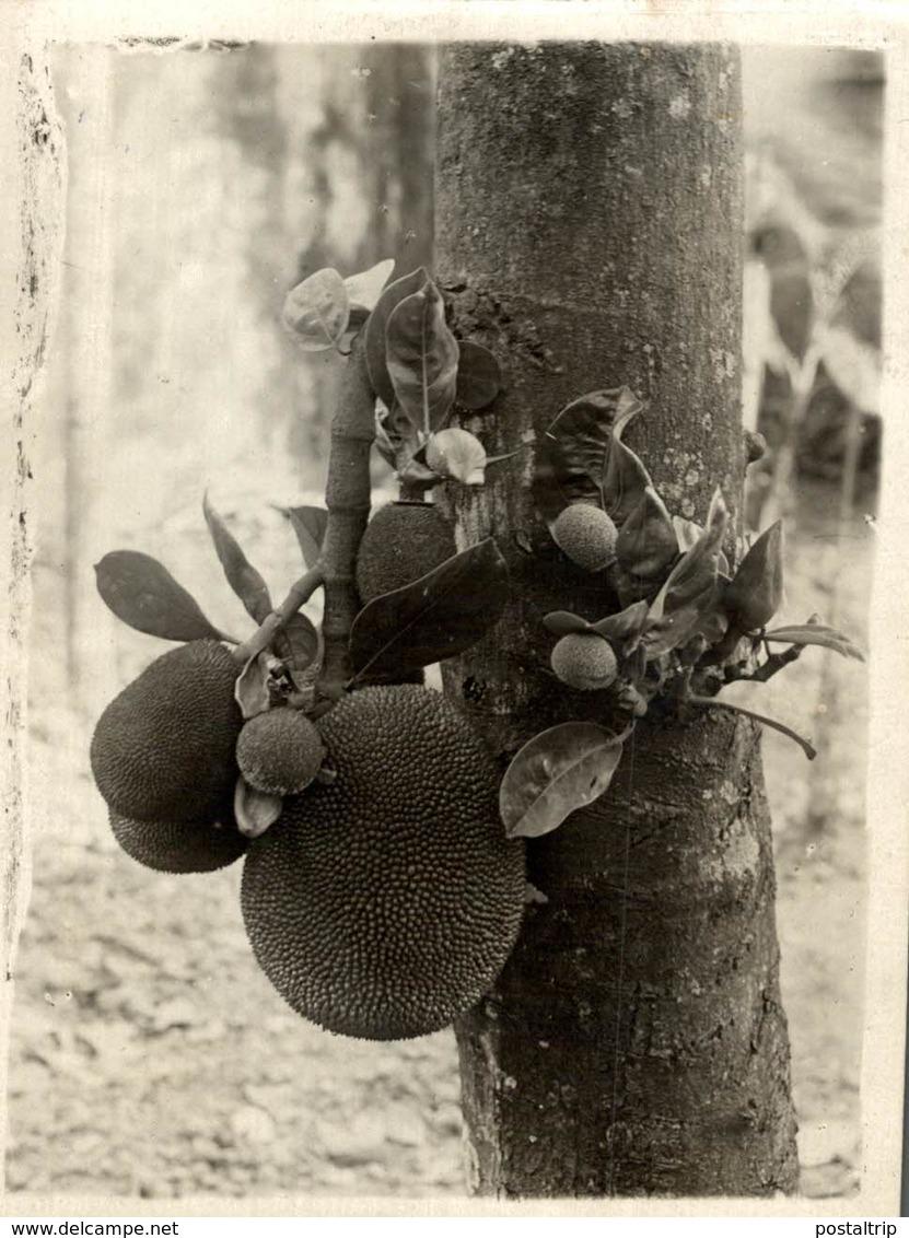 VIETNAM    FRUITS DE JACQUIER HANOI RONKIN INDOCHINE   Fonds Victor FORBIN (1864-1947) - Lugares
