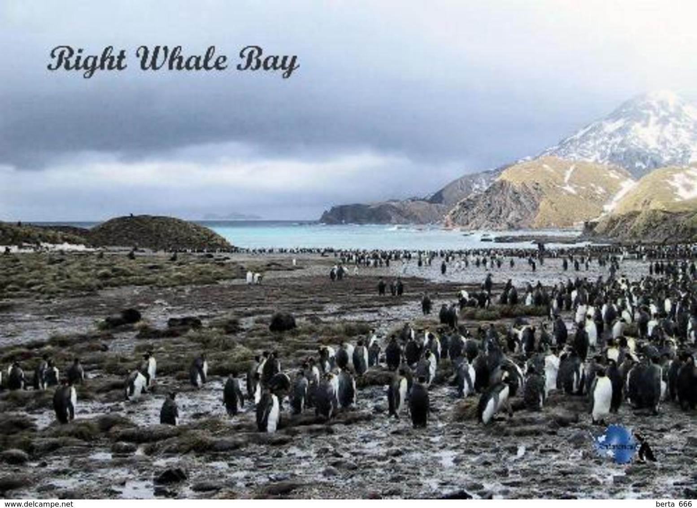 AK Südgeorgien South Georgia Right Whale Bay New Postcard - Sonstige